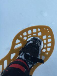 Keltainen lumikenkä.